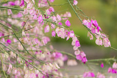 Violet Spring Flowers Image libre de droits