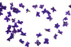Violet Spring Flowers stockbild
