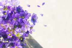 Violet Spring flowers background with copy space. Stock Photo
