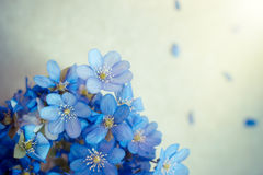 Violet Spring flowers background with copy space Royalty Free Stock Image