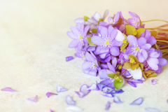 Violet Spring flowers background with copy space Royalty Free Stock Photography