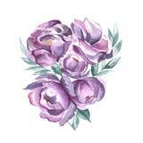 Violet Spring Flowers ilustración del vector