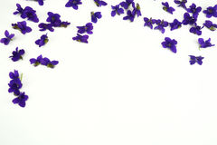 Violet spring flowers Royalty Free Stock Photography