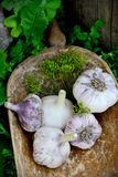 Violet  spring garlic rustic style Royalty Free Stock Photos