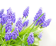 Violet spring gentle flowers Royalty Free Stock Images