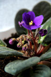 Violet and sunlight. Beautiful little violet flower on the celling Stock Photo