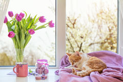 Violet sunshine cozy home concept Royalty Free Stock Image