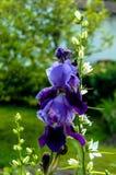 Violet taffy Stock Images
