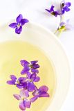 Violet tea Stock Photos