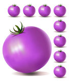 Violet Tomatoes Royalty Free Stock Photos