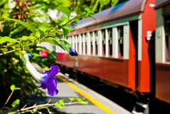 A violet in a train station. A violet and a red coach in a train station Royalty Free Stock Photography