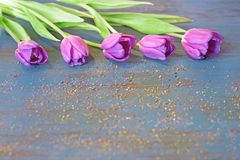 Violet tulip flowers on blue wooden background with golden sand and copy space Royalty Free Stock Photography
