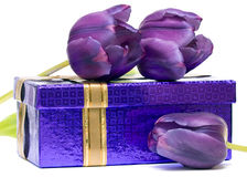 Violet Tulips And Gift Box Stock Photos