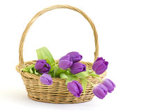 Violet tulips in a basket Royalty Free Stock Photography