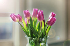 Violet tulips in a glass vase. Bouquet of violet tulips in a glass vase on a table Stock Images
