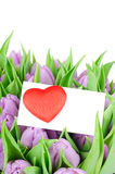 Violet tulips and a greeting card Stock Photos