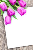 Violet tulips on the oak brown table with white sheet of paper 3 Royalty Free Stock Images