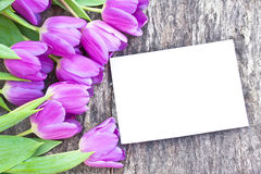 Violet tulips on the oak brown table with white sheet of paper Stock Images
