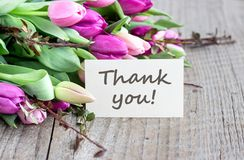 Violet tulips with Thank you. Bouquet with pink and violet tulips and card with text: Thank you Stock Photography