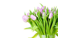 Violet tulips in the vase Stock Images