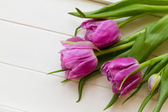 Violet tulips on white wooden background Royalty Free Stock Image