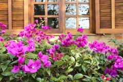 Violet View Stockbilder