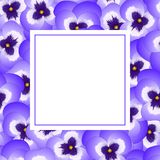 Violet Viola Garden Pansy Flower Banner Card Border. Vector Illustration.  royalty free illustration