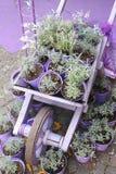 Violet wheelbarrow. Wheelbarrow with different types of plants Royalty Free Stock Photos
