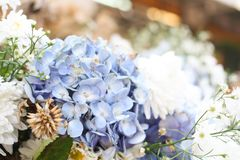 Violet and white fresh flower background. Flower background stock images