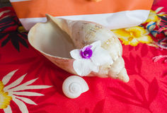 Violet white orchid flower on sea conch shell with summer beach Stock Images
