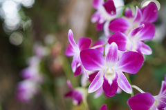 Violet white orchids Stock Photo