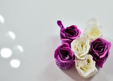 Violet and white roses top view