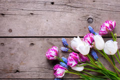Violet and white tulips and muscaries flowers on aged wooden  ba Stock Photography