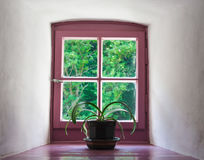 Violet window Stock Photography