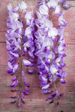 Violet wisteria flowers on pink old wooden background Stock Images