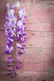Violet wisteria flowers on pink old wooden background Royalty Free Stock Photos