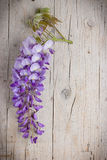 Violet wisteria flowers on white wooden background Stock Photography