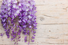 Violet wisteria flowers on white wooden background Stock Photos