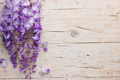 Violet wisteria flowers on white wooden background Royalty Free Stock Images