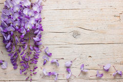 Violet wisteria flowers on wooden background Royalty Free Stock Photos