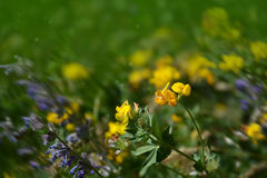 Violet and yellow flowers background Royalty Free Stock Images