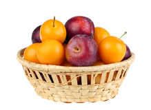 Violet and yellow plum Royalty Free Stock Photo