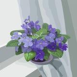 Violeta libre illustration