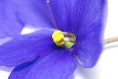 Violeta Foto de archivo