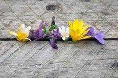 violeta fotografía de archivo