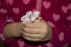 violeta Fotos de archivo libres de regalías
