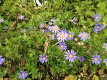 violeta fotografia de stock