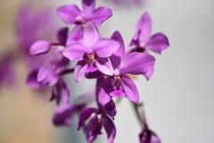 Violeta agradável fowers coloridos imagens de stock