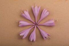 A violeta brota a luz da qualidade do estúdio Imagem de Stock Royalty Free