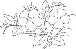 Violeta del dibujo de lápiz Imagen de archivo libre de regalías